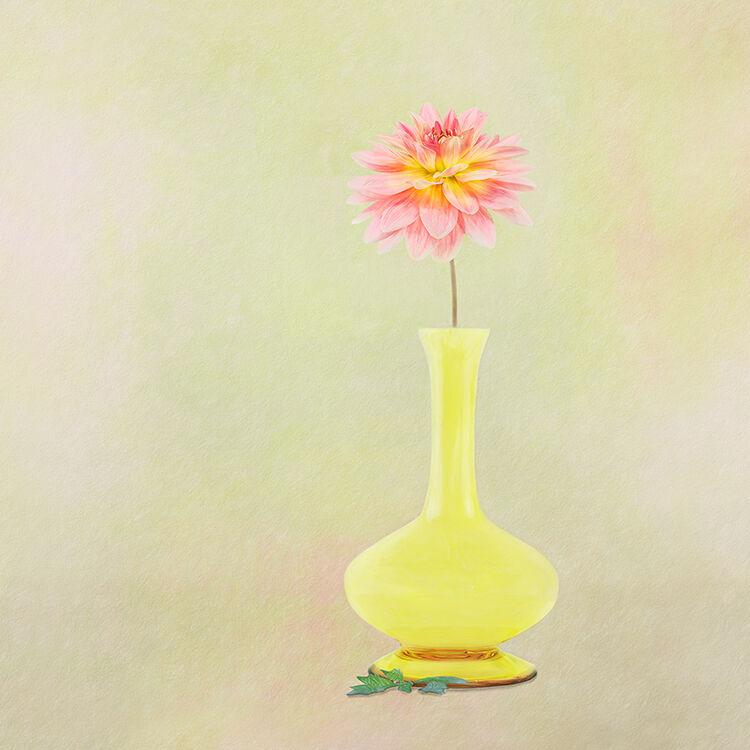 Dahlia in Yellow Vase