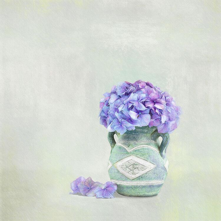 Hydrangea Portrait