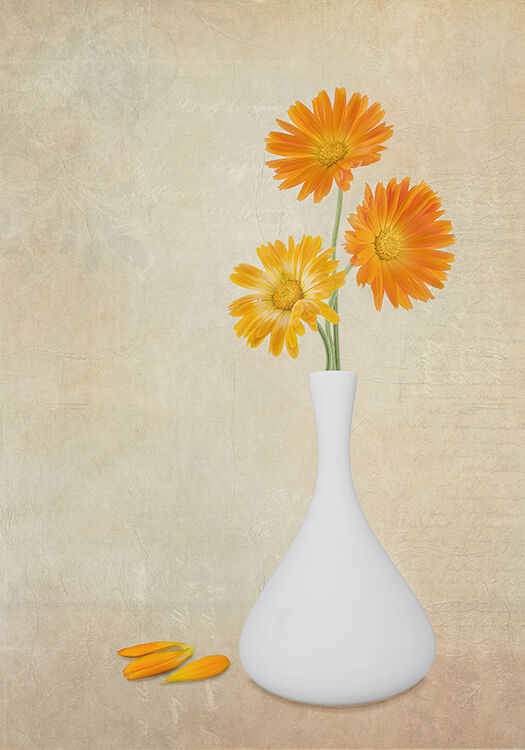 Orange flowers in white vase