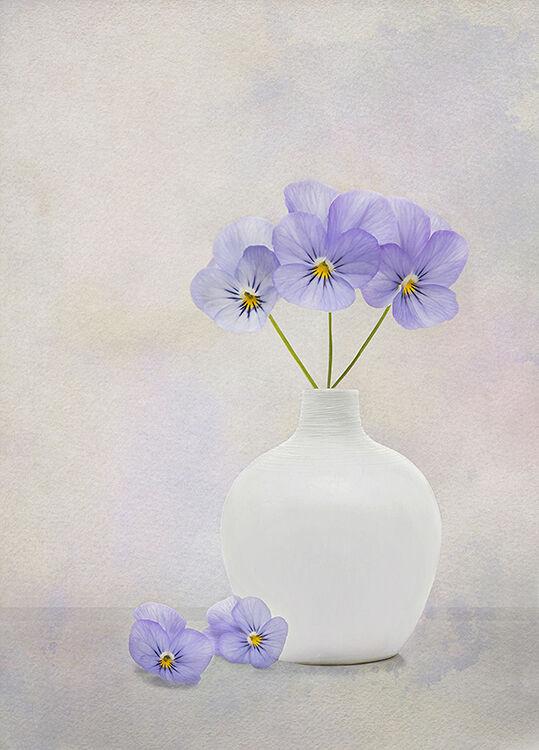 Pansies in White Vase