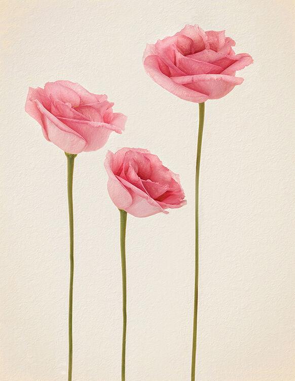 Pink Eunstoms