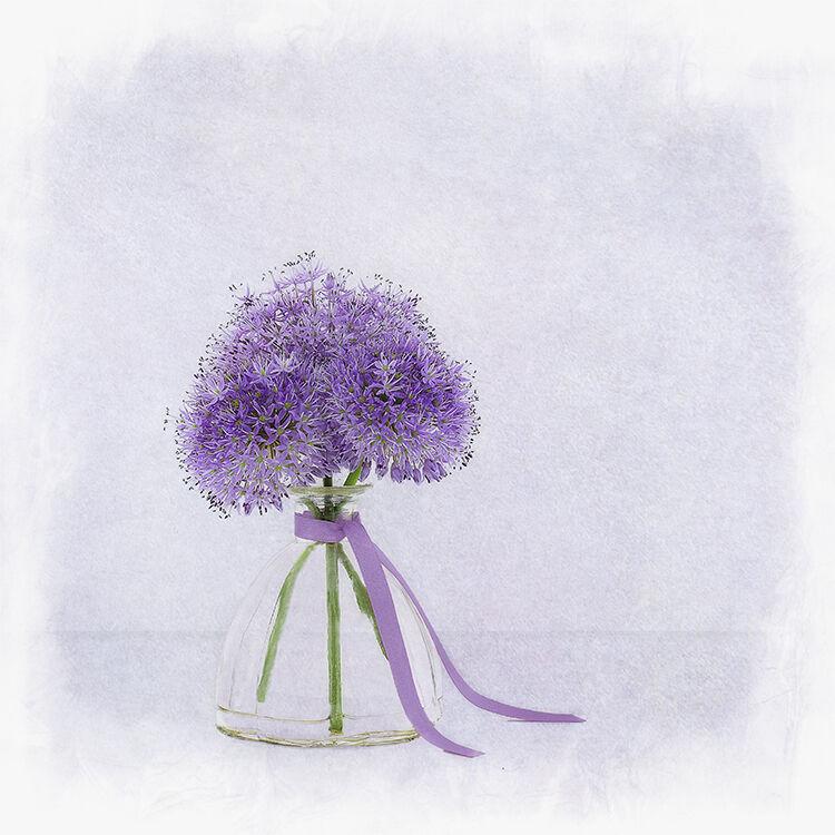 Purple Alium in Glass Vase