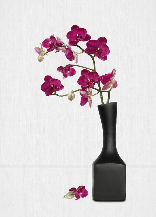 Red Orchids in Black Vase
