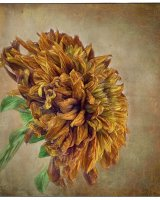 Single Autumn Bloom
