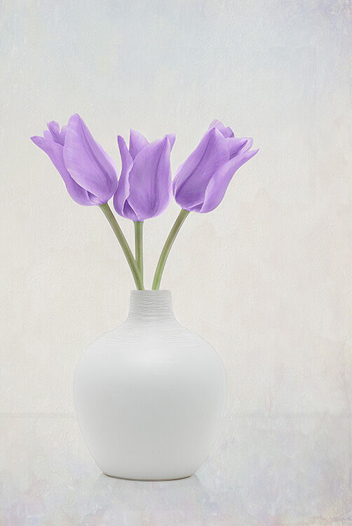 Three Purple Tulips in White Vase