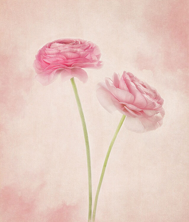 Two Pink Ranchulus