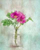 Wild Rock Roses