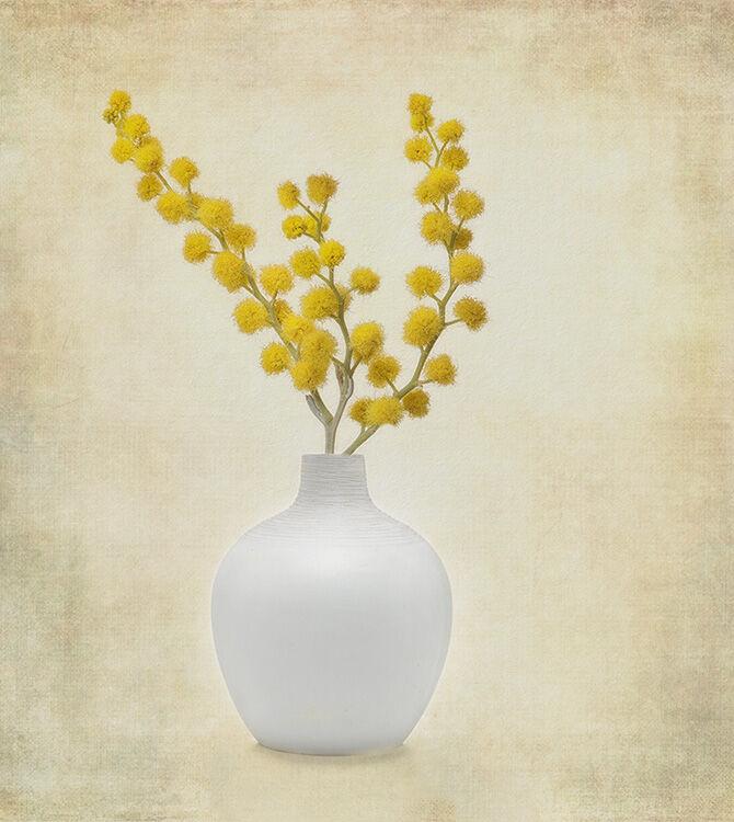 Yellow Mimosa in White Vase