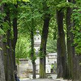 'Les Arbres' Paris