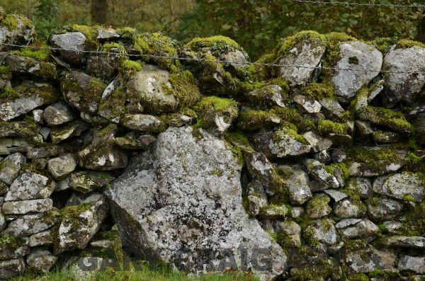 Dry stone wall study