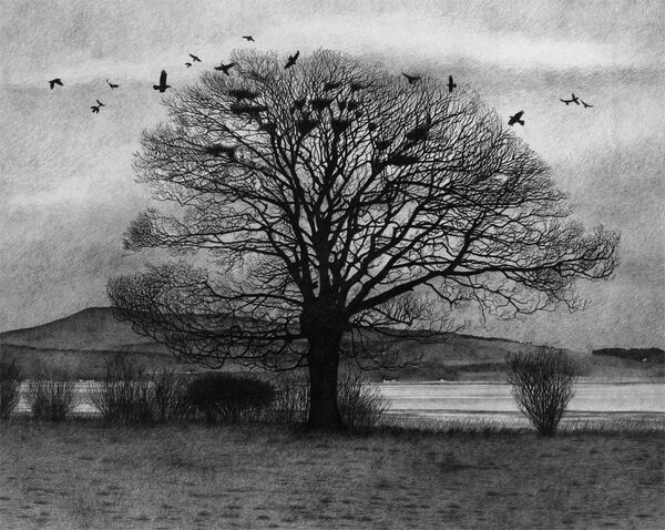 The Rookery (pencil)