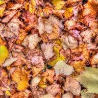 Autumn Leaves - 5