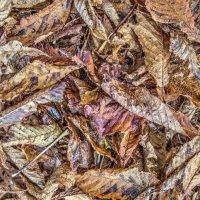 Autumn Leaves - 2