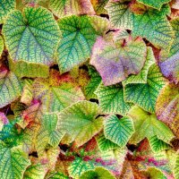 Autumn Leaves -1