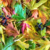 Autumn Leaves - 3