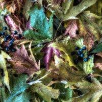 Autumn Leaves - 4