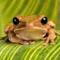 Asian Tree Frog - Mr Grumpy  (Photo Canvas)