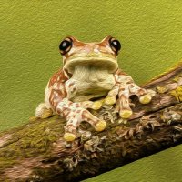 Amazon Milk Frog (Photo Canvas)