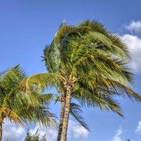 Windy Palm Trees