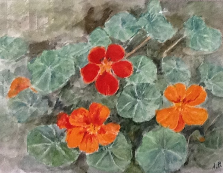 Nasturtium by Ann Brown