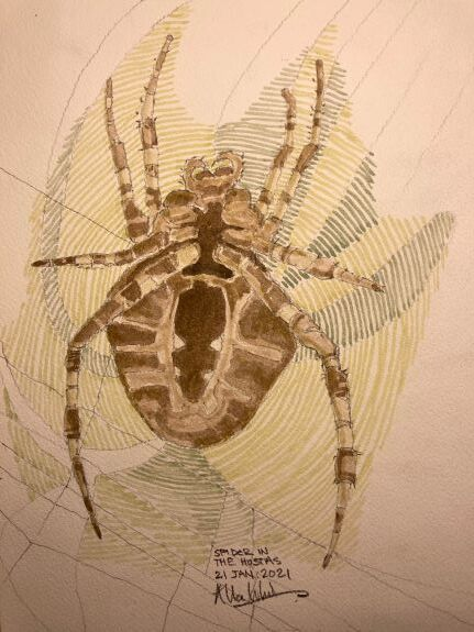 Allan White Spider in the Hostas