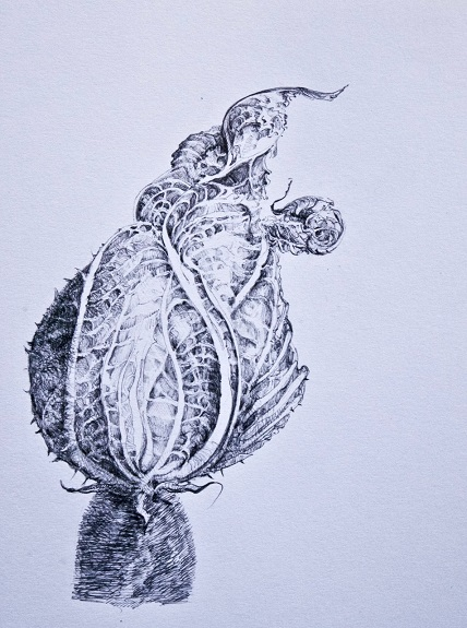 Courgette Flower, -ball point