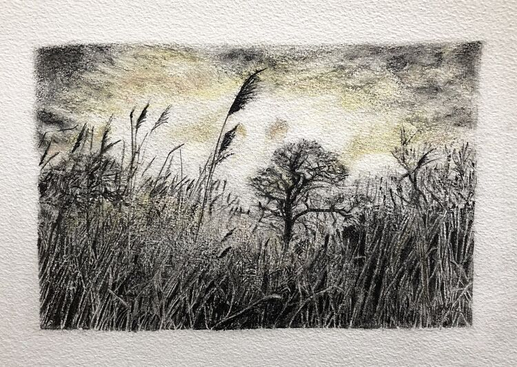 Julie Manning, Grasses