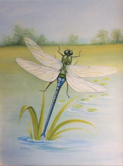 Jeff Stamp -'Dragonfly'