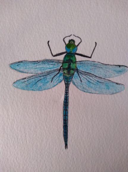 Sheila Lewis -'Dragon fly'