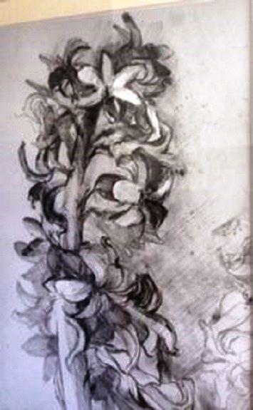 Karen Stott, Hyacinth -pencil drawing