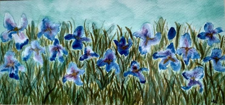 102 Irises -watercolour by Sheila Lewis