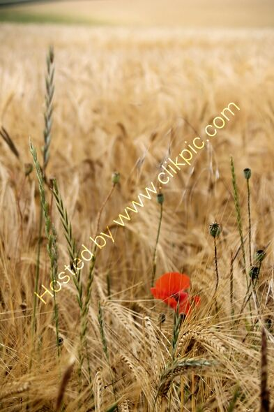 To be one in a field of many takes true courage
