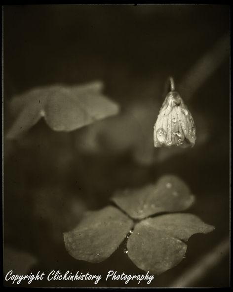 Spring rain on flower