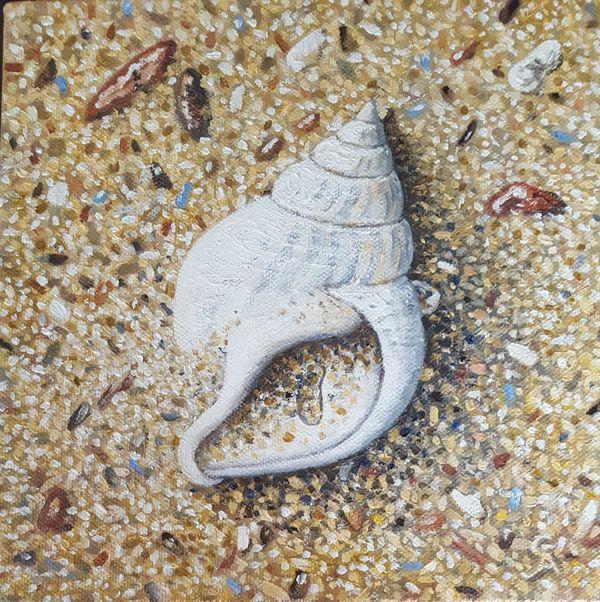 White Whelk