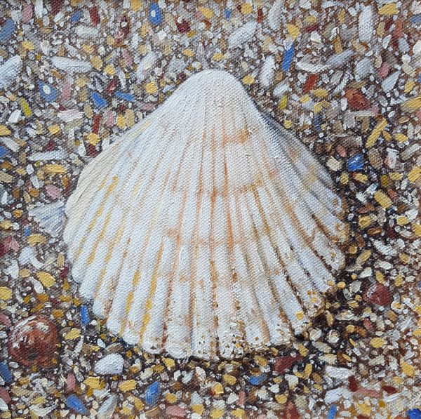 Cockle Shell on the beach