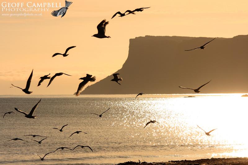 Ballycastle Gulls