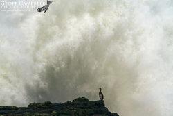 Cormorant Explosion