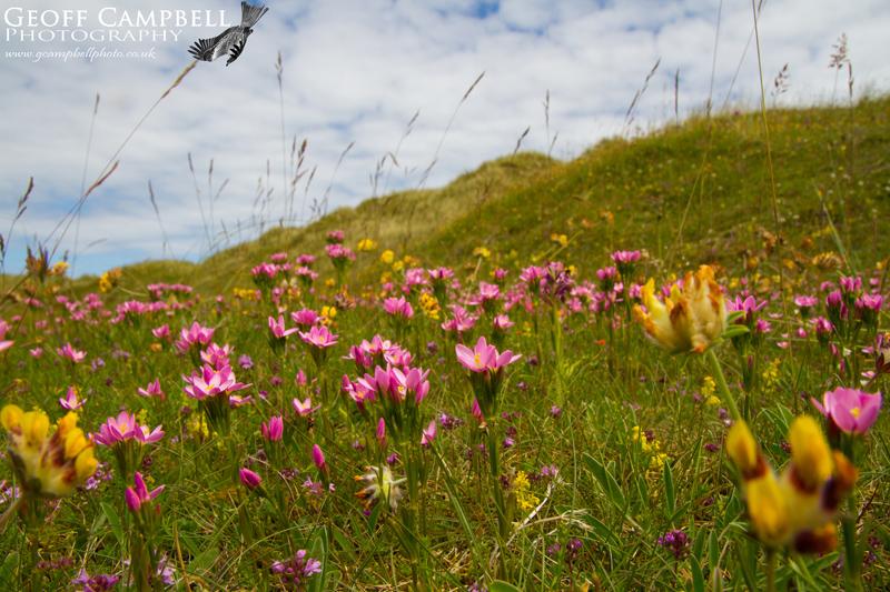 Dune Grasslands - Bann Estuary