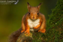 Red Squirrel Face to Face