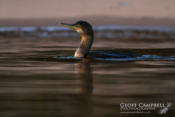 Shag at Twilight