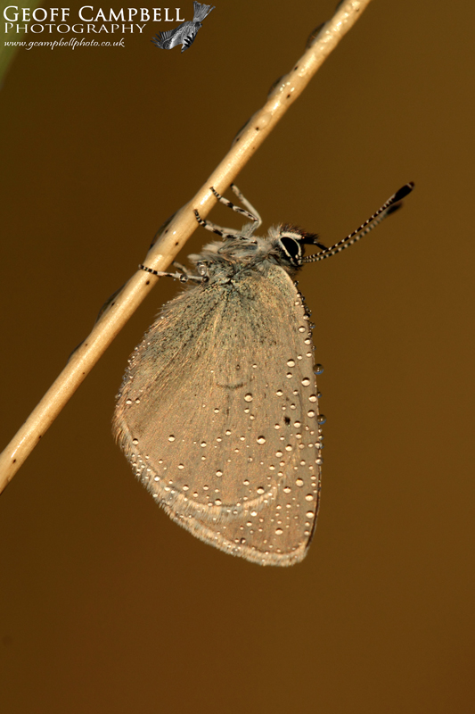 Small Blue at Sunrise
