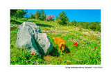"""#D043S - Spring landscape with my """" assistant """"."""