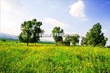 #D050 - Rural land.