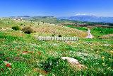 #D062 - The spring landscape.
