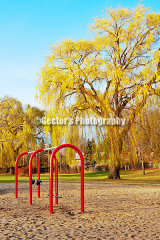 #D136 - Yellow leaves, stilled swings ... is fall.