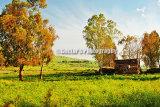 #D139 - Rural land.