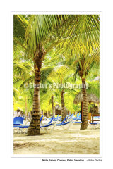 #D162S - White Sands, Coconut Palm, Vacation ...