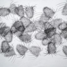 A Multitude of Teasels