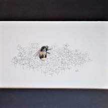 Buff-tailed bumblebee and clover