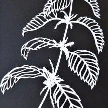 Common Nettle